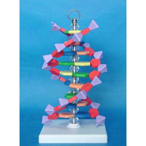 Модел на ДНК молекула