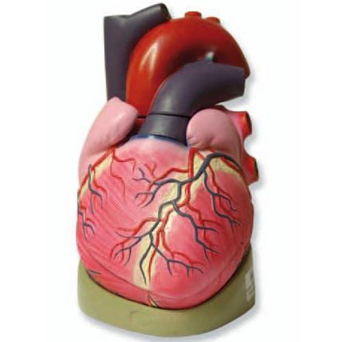 модел на сърце