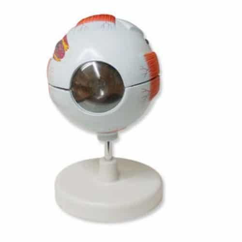 модел на око