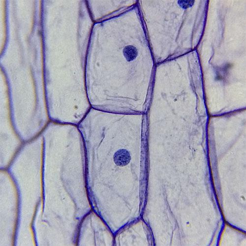 микроскопски препарати